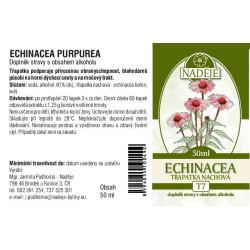 Tinktúra Echinacea a prosztatitisből